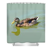 Female Mallard Duck  Shower Curtain