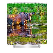 Female Moose Near Airport In Chicken-alaska   Shower Curtain