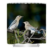 Female Mountain Bluebird With Fledgling Shower Curtain