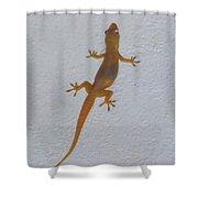 Female Nocturnal Lizard Shower Curtain