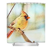 Female Northern Cardinal - Digital Paint I Shower Curtain