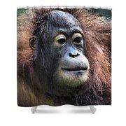 Female Orangutan Borneo Shower Curtain