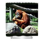 Female Orangutan-san Diego Shower Curtain