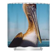 Female Pelican Shower Curtain