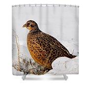 Female Pheasant Shower Curtain