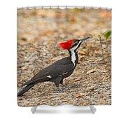 Female Pileated Woodpecker Shower Curtain