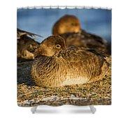 Female Readhead Duck Shower Curtain