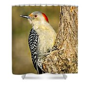 Female Red-bellied Woodpecker Shower Curtain