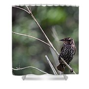 Female Red-wing Shower Curtain