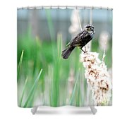 Female Red Winged Black Bird Shower Curtain