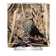 Female Red-winged Blackbird Shower Curtain