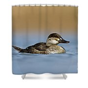 Female Ruddy Duck Shower Curtain