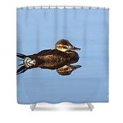 Female Ruddy Duck Oxyurus Jamaicensis Shower Curtain