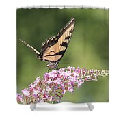 Female Tiger Butterly-1-featured In Macro-comfortable Art And Newbies Groups Shower Curtain