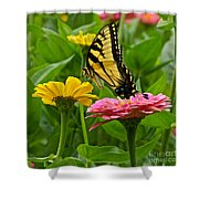 Female Tiger Swallowtail Butterfly With Pink And Yellow Zinnias Shower Curtain
