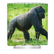 Female Western Lowland Gorilla Shower Curtain