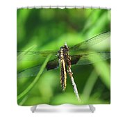 Female Widow Skimmer Shower Curtain