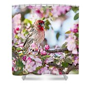 Feminine Viewpoint Shower Curtain