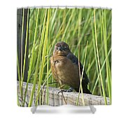 Fence Grackle Shower Curtain