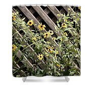Fence Lined Wildflowers Shower Curtain