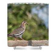 Fence Walker Shower Curtain