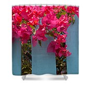 Fence With Bouganvillia Shower Curtain