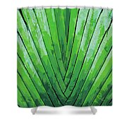 Fern - Color Marker Shower Curtain