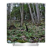 Fern And Hemlock Hill Shower Curtain