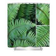 Fern Collage Shower Curtain