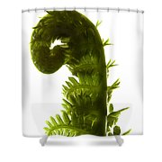 Fern Curve Shower Curtain