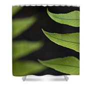 Fern Cyrtomium Fortunei Shower Curtain