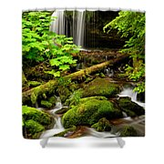 Fern Falls Panoramic Shower Curtain