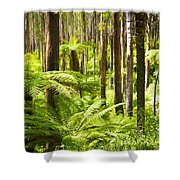 Fern Forest Shower Curtain