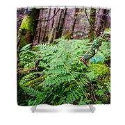 Fern In Forest Shower Curtain