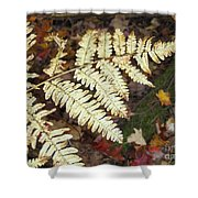 Fern In The Forest Shower Curtain