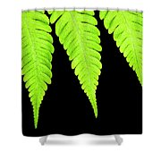 Fern Isolated On Black Background Shower Curtain