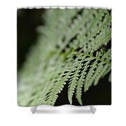 Fern Leaf Shower Curtain
