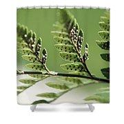 Fern Seeds Shower Curtain