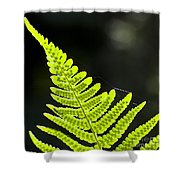 Fern Tip Shower Curtain