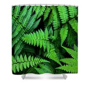 Ferns Along The River Shower Curtain