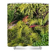 Ferns And More Shower Curtain