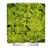 1m2436-ferns At The Base Of Mt. Robson  Shower Curtain
