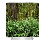 1a2912-ferns In Rain Forest Canada  Shower Curtain