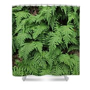 D3b6333-ferns In Sonoma 2  Shower Curtain
