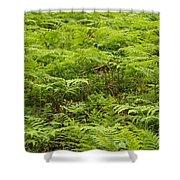 Ferns In Summer Shower Curtain