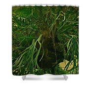 Ferns In The Jungle Room Shower Curtain