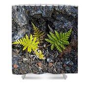 Ferns In Volcanic Rock Shower Curtain