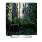 Ferns Of The Redwood Forest Shower Curtain