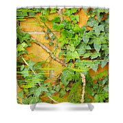 Ferns Vines And Lines 2am-112099 Shower Curtain