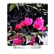 Fernwood Botanical Garden Bougainvillea Niles Michigan Usa Shower Curtain